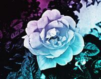 Flowers Forever Flowers