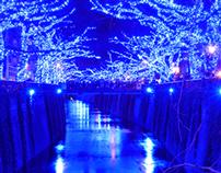 Nakameguro Blue Grotto Illumination 2014 Tokyo
