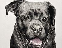 """""""Dog Portraits"""" part 2"""