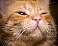 Cats, Koty