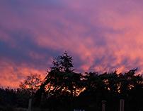 Cedarcroft Sunrise