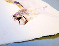 Goldwings of the Barn owl