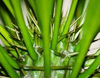 Green Macro