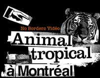 Animal Tropical Documentary