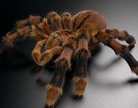 Tarantula 3D
