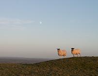 Photo-walk: Mount Caburn