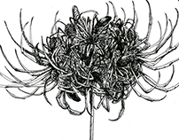 Contextual Flowers