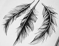 Feathers illustration