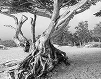 Root Pride