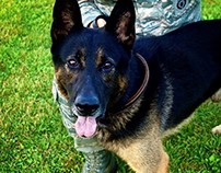 "Military Working Dog ""JUMPY"""