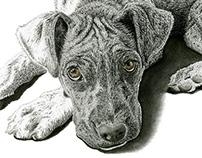 Pet Sketch 2012 - 2014