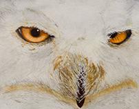 Buho / Owl