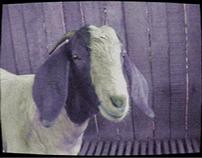 Netshoes - Goats