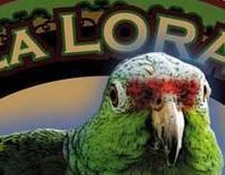 La Lora Taller de Enderezado, Logo y Tarjeta