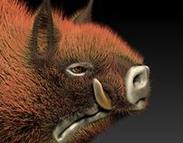 Hairy Boar