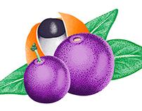 FRUITS ILLUSTRATIONS FOR GRAN MALTA