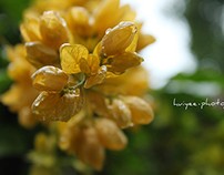 Photography (Bokeh)