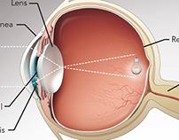 Sensory Organs: Eye, Ear