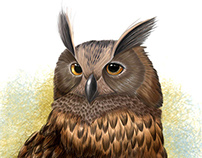 OWL PROYECT 2015