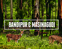 Bandipur & Masinagudi - The reserves of two states