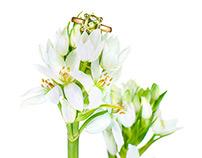 Rugiada 2015 Jewelry Flower Campaign