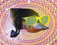 Hipster Platypus