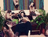 Crazy Cat Lovers