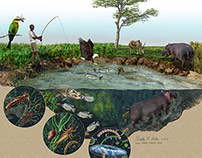 Kenyan Hippo Ecology Illustrations