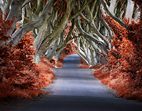 'The Dark Hedges- Northern Ireland'...