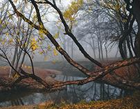 old, new fog...