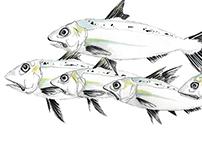 Product Development - Fish Decals