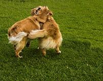 OMFG DOGS!!!  2