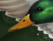Mallard  ( Painting )