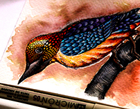 WIP- Book for Bird Watching Enthusiasts.