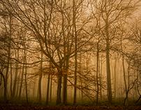 Woodland Wonders #1