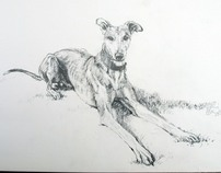 Wilson the dog, pencil sketch.