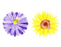 Nature Watercolour Illustrations
