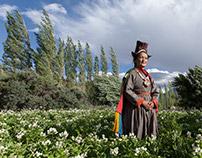 Farmstay Ladakh