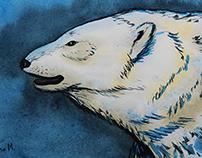 Белый медведь / Polar Bear / Ayı