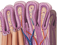 Tissue Types (Stomach)