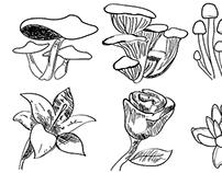 Drawing digitally using Illustrator draw program.