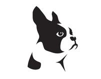 Identity for the Boston Terrier Rescue