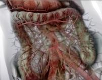 Gastroenterology - medical animation
