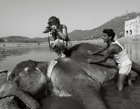 Elephants and Tourism
