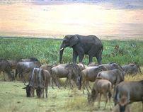 Blake Wildlife Images