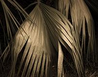 Palmetto Branch