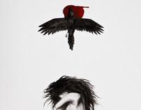 Sleeping Crows