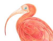 Fauna colombiana / III