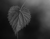 Plants in black and white
