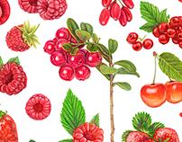 Fresh berries vector illustration